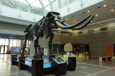 大象5KG始祖「古長鼻獸」體型如貓