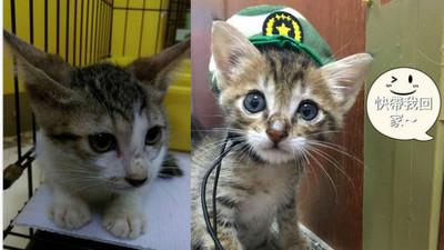「養牠就沒有你!」媽媽被收服後大反差 親手織毛衣給貓孩子