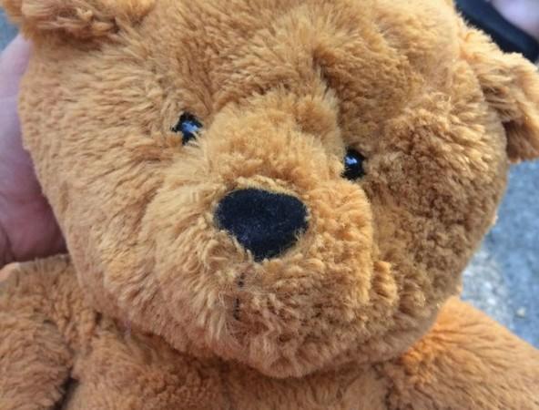 ▲熊熊回家的路怎麼這麼遙遠...(圖/翻攝自臉書/Amanda Fields)