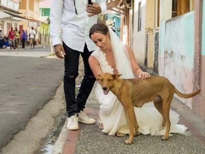 婚紗拍一半「流浪狗亂入」,最暖巧遇給浪浪們一個家