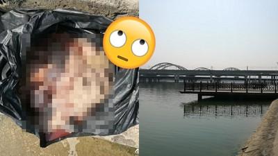 智商沒下限!「沒受精魚卵」拋河當放生 網:佛祖都被氣死了