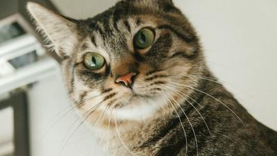 「朕壓力也是很大的」 4個原因顛覆你對貓咪過爽爽的印象