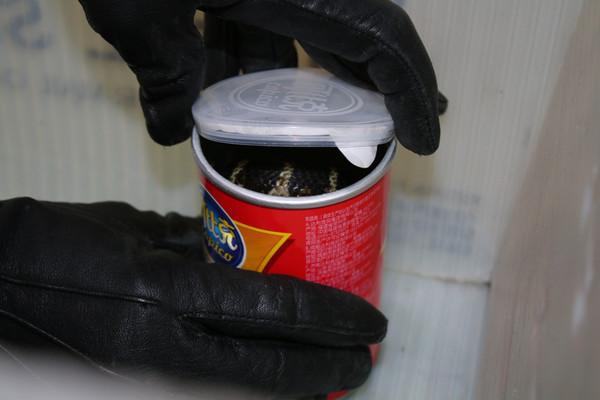 ▲每個走私的洋芋片罐子內都裝著一隻劇毒的國王眼鏡蛇。(圖/路透社)