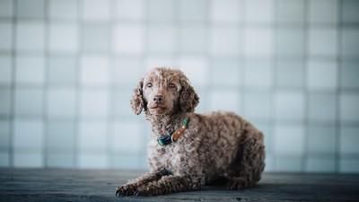 【測驗】從領養狗狗類型看個性,你是社交型還是邊緣型?