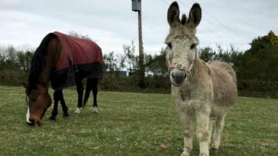 友情比人還堅定!被棄養馬驢不願分離,感人友誼讓牠們找到家