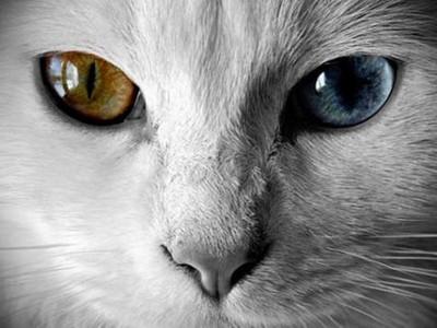 【測驗】殘留在眼中的會是什麼顏色?找出屬於你的代表色