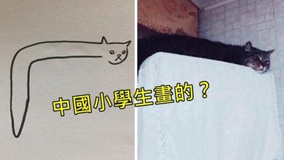 怪可愛「蛇蛇貓插畫」巴西作者暴怒:中國人硬凹這是小學生作業
