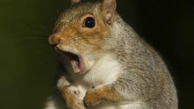 啃傷5人!「殭屍松鼠」入侵紐約市 網:病毒終於爆發