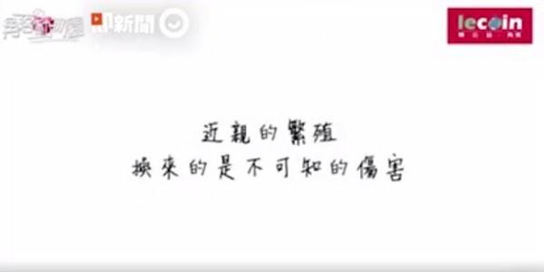 ▲「人造貓」金吉拉近親繁殖!(圖/翻攝自即新聞)。