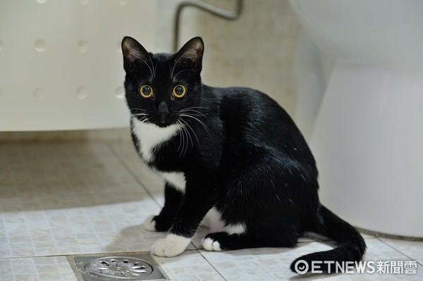 鬼月未到...房內踏墊卻天天離奇在客廳!偷拍揭「貓小偷」(圖/朱先生提供)