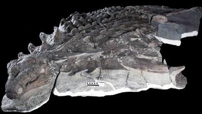 1億年前整隻「消光黑恐龍」出土 陽光下龍鱗皮仍暗如陰影