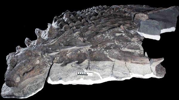 最完整「消光黑塗裝」恐龍出土 龍鱗皮陽光下猶如隱身黑影由(翻攝自Royal Tyrrell博物館/Drumheller/Gizmodo)