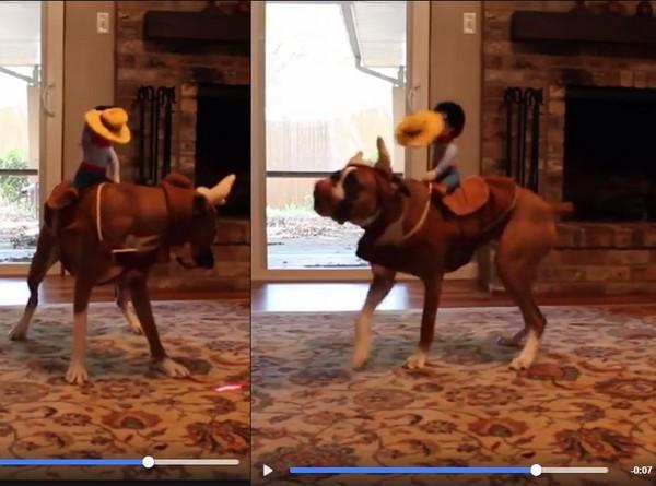 ▲▼不只喵星人狗也會追雷射紅點 加上娃娃就好像騎牛大賽。(圖/取自臉書粉絲專頁「JukinVideo」)