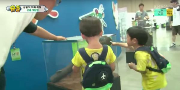▲▼ 4歲書俊目睹「交配過程」 爸爸嚇壞:你怎麼知道(圖/翻攝自KBS、文貞媛IG)