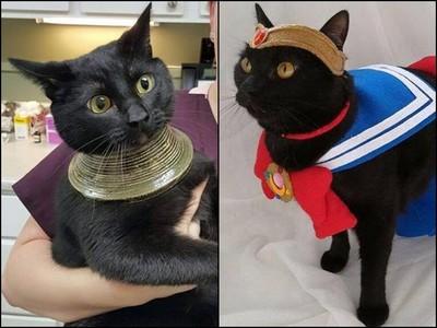 每年8月17日是「黑貓感謝日」 關於牠們還有這13個冷知識