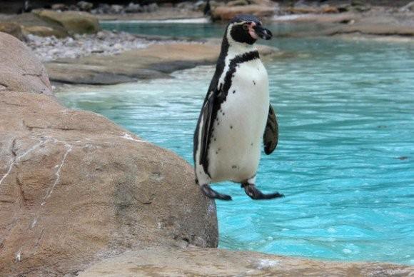 ▲▼企鵝站的方式很像bug。(圖/翻攝自推特,ounui)
