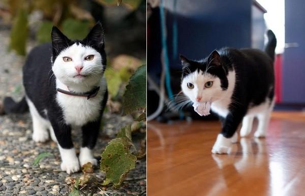 像披黑色斗篷!小貓因外貌和缺陷遭棄 幸運找到第2個家(圖/翻攝自The Adventures of Wingshing粉絲專頁)