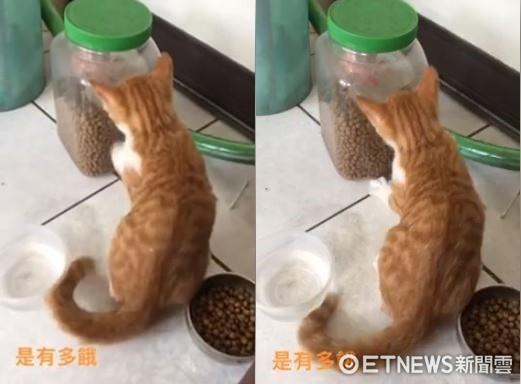 ▲小橘狂抓大桶「新鮮飼料」 直接忽視身後裝滿的那碗…。(圖/網友卓千妤提供)