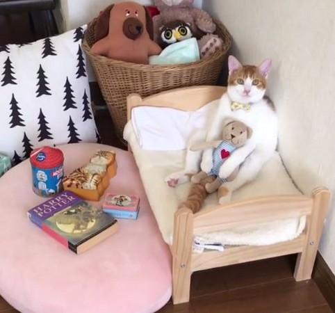 ▲貓咪Canele跟泰迪熊娃娃一起醒來。(圖/翻攝自IG:riepoyonn)