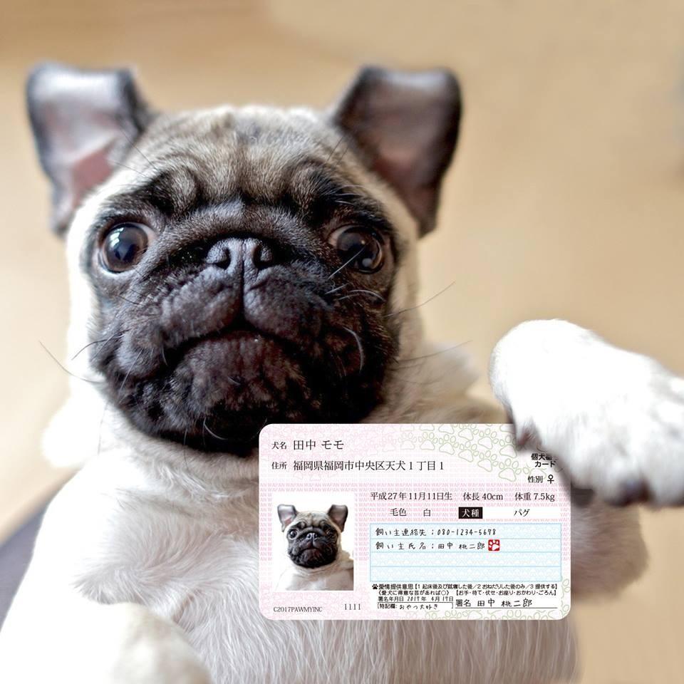 ▲狗狗身分證(圖/翻攝自ポーミー(Pawmy)@Facebook)