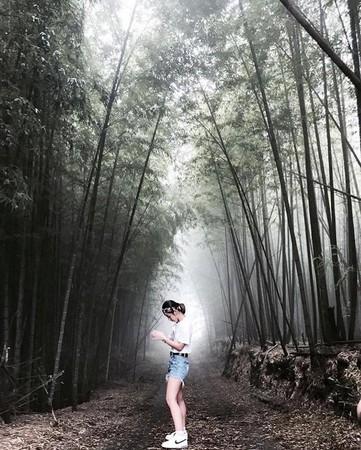 ▲銀杏森林旁的竹林隧道。(圖/IG@love_mimi33提供,請勿任意翻攝以免侵權)