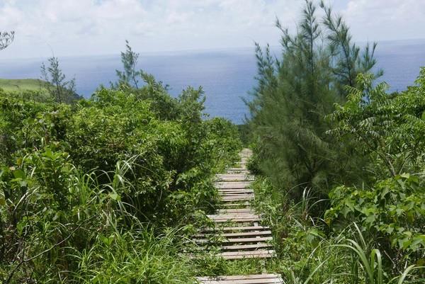 通往大天池前段的木棧道,已多處毀損。