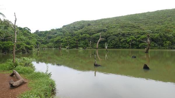 大天池中的枯木,是大自然給予的自然景觀。