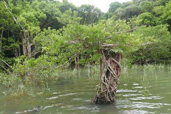 水中之木,每一棵都是藝術品。