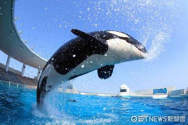 不只迪士尼!日本鴨川海洋公園享受被「殺人鯨」噴濕身(圖/日本千葉鴨川海洋公園提供)