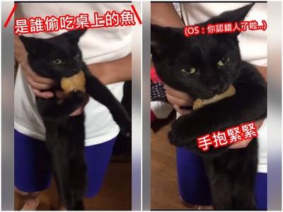 主人現逮「偷魚賊」 犯貓小黑嘴叼魚雙手抱緊緊不認罪
