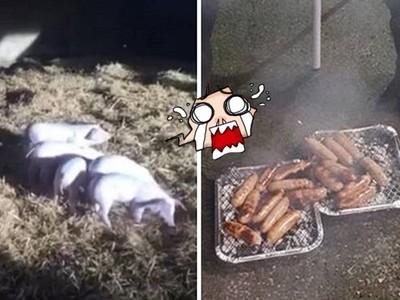 以為撿回一命!20隻豬農場大火被救,結果被做成香腸送給消防隊