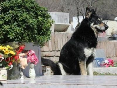 牠在主人墓前守了10年,雙眼失明腳蹣跚仍堅持守墓等待