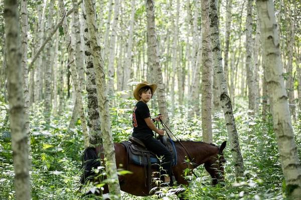 極美的白樺樹林,好像魔法森林。