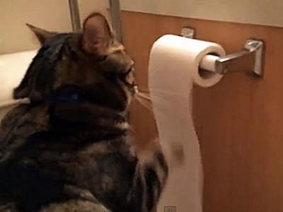 讓尿乾在內褲上!調查「廁所沒紙時會怎麼辦」,結果超噁...