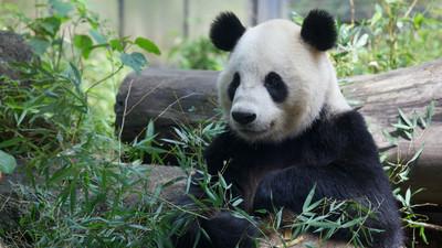 暑假結束=學生自殺高峰期,上野動物園:來找動物取暖吧!