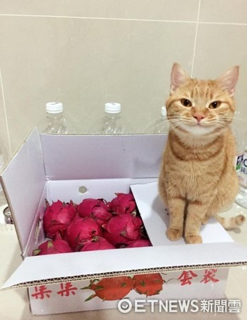 ▲進門的包裹需經嚴格審查!貓海關「一抹微笑」:扣留火龍果!(圖/網友Bessie Windsor提供,請勿隨意翻拍,以免侵權。)