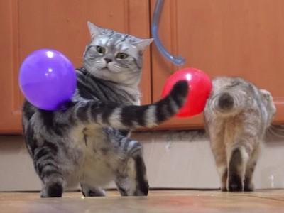 「靜電貓咪」超無奈圖集,氣球就黏在我身上有什麼辦法(Φ_Φ)