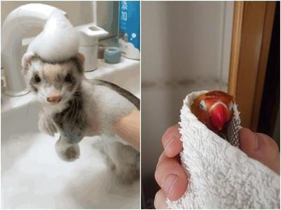 不是所有毛孩都不愛洗澡? 這些圖證明牠們真的爽翻了