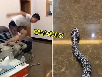生悶氣滑手機,老婆丟出「靈活蛇蛇」..老公嚇到噴飛跳上櫃子