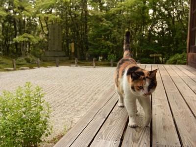 「貓咪四季」滿滿禪意,看貓怎麼睡就知道季節
