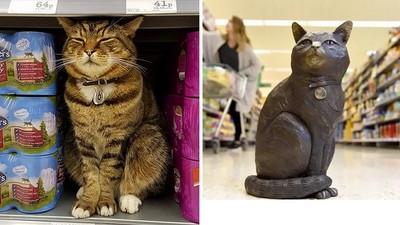 永遠坐鎮商場!「超市貓」離世當天使,粉絲募16萬做紀念銅像