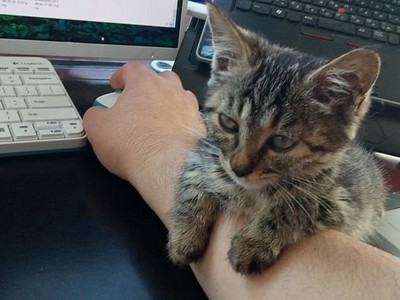 奴才不給睡鍵盤,小貓無奈趴手臂:只好攻佔這了喵