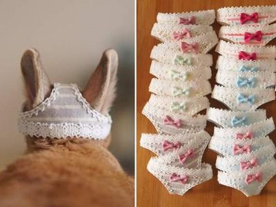 兔耳穿過「內褲洞洞」超可愛 網友讚:變態裡的一股清流!