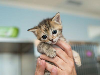 絕對「不要亂碰幼貓」的理由,你可能會害牠們活不下去