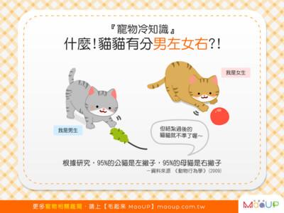 寵物冷知識! 貓咪也有慣用手...竟分「男左女右」?