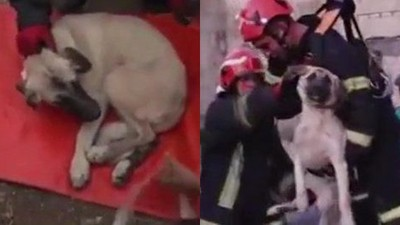 「虐打拋下20米橋墩」流浪犬四肢慘斷 消防哥抱起給秀秀