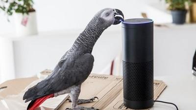 鳥也會網購!追查可疑包裹,才發現「家裡鸚鵡用我聲音下單」