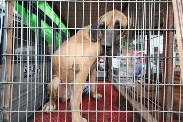 ▲▼狗兒躺在籠內悶悶不樂。(圖/取自동물보호시민단체 카라 臉書)