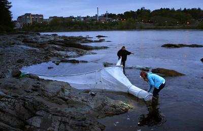 首張養殖漁業寒害保單 用溫度做理賠依據