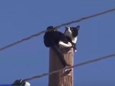 貓咪卡電線杆頂端警察急救援 尷尬了牠本喵沒想下來欸